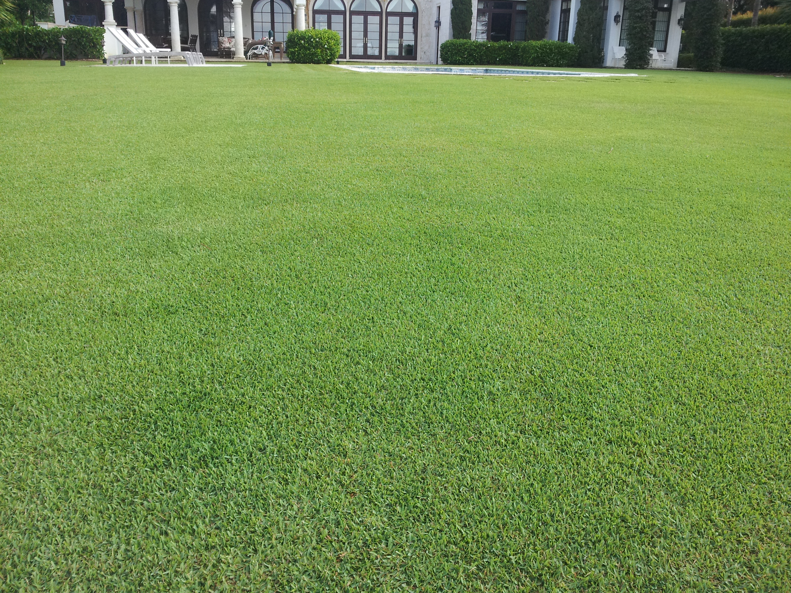 Gallery bio green fertilization redefined bio green for Pretty grass
